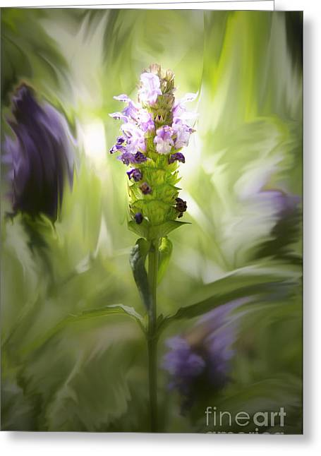 Color Enhanced Greeting Cards - Stay Centered Greeting Card by Belinda Greb