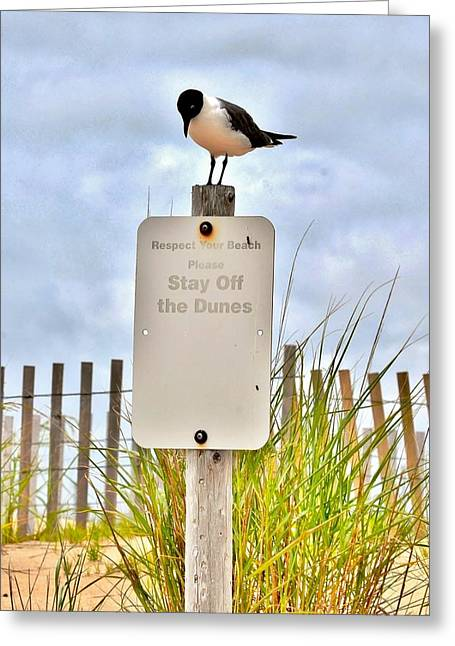 Beach Greeting Cards - Stay Off the Dunes Greeting Card by Kim Bemis