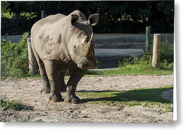 One Horned Rhino Greeting Cards - I Can Hear You Greeting Card by Bob Phillips