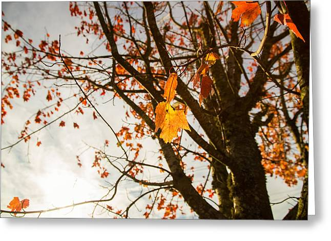 Colors Of Autumn Greeting Cards - Stay put Greeting Card by Kunal Mehra