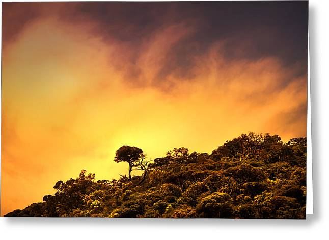 Ceylon Greeting Cards - Staying Proud. Horton Plains. Sri Lanka Greeting Card by Jenny Rainbow