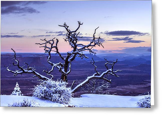 Southern Utah Greeting Cards - Steadfast  Greeting Card by Dustin  LeFevre