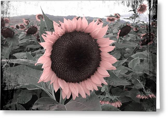 Sunflower Patch Greeting Cards - Steadfast Greeting Card by Leysilie Williams