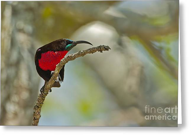 Stealth Attack Greeting Card by Ashley Vincent