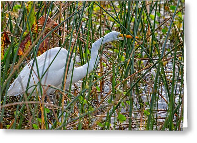 Merrit Greeting Cards - Stealthy Egret Greeting Card by John Bailey