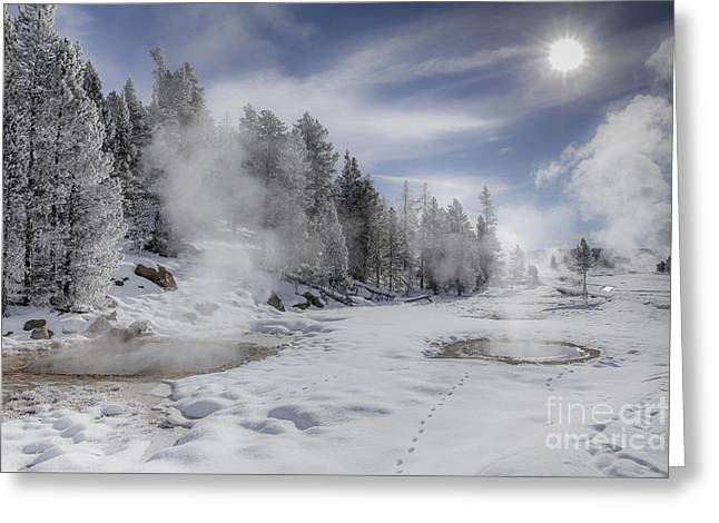 Snow Tree Prints Greeting Cards - Winter Landscape- Steaming Pools on a Sunny Day Greeting Card by Feryal Faye Berber