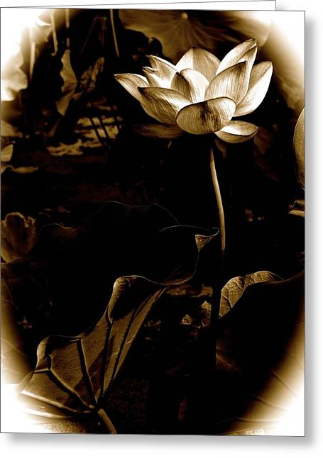 Lotus Full Bloom Greeting Cards - Steampunk Lotus Greeting Card by Larry Knipfing