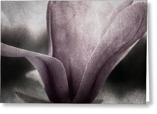 Cool Tones Greeting Cards - Steel Magnolia Greeting Card by Darlene Kwiatkowski