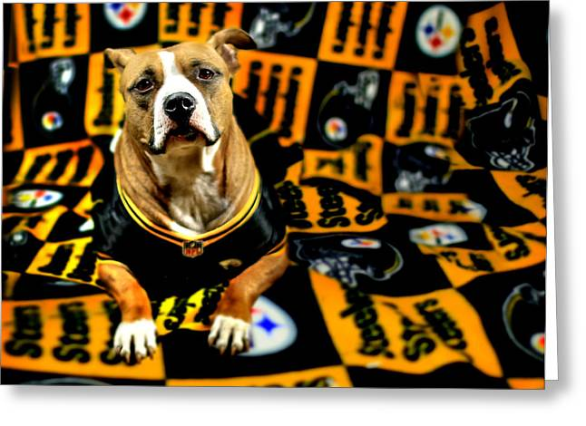Bully Greeting Cards - Steelers Pup Greeting Card by Shelley Neff