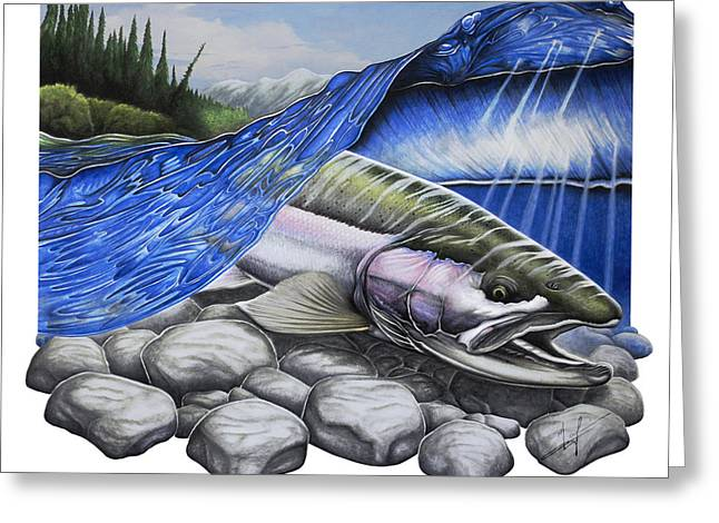 Fish Drawings Greeting Cards - Steelhead Dreams Greeting Card by Nick Laferriere