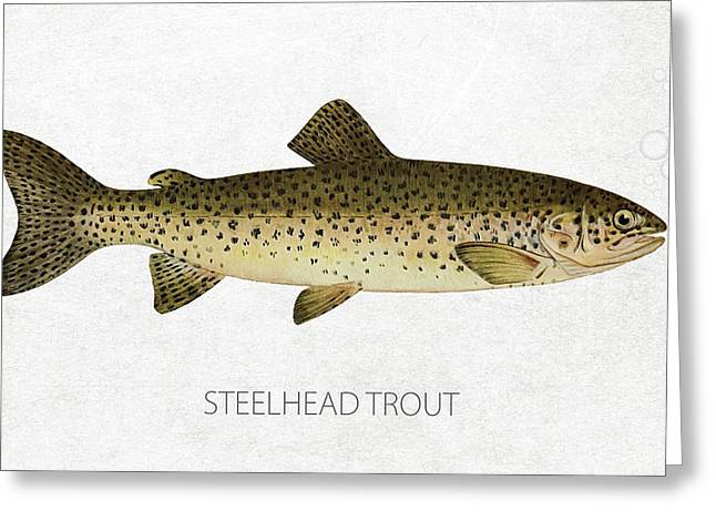 Fresh Water Fish Greeting Cards - Steelhead Trout Greeting Card by Aged Pixel