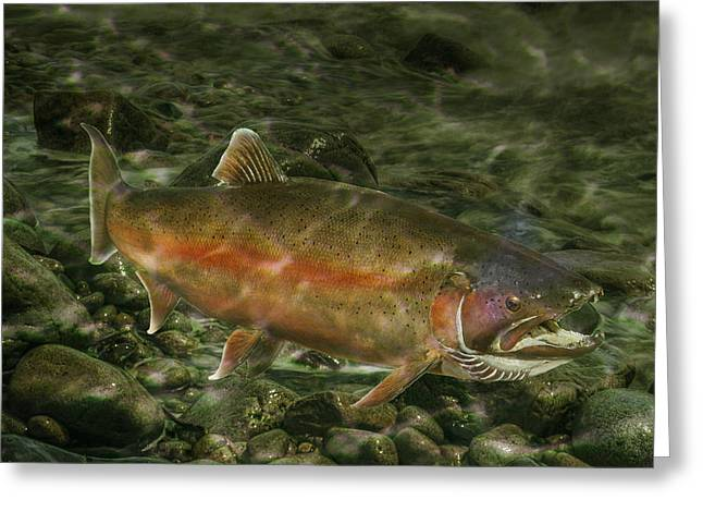 Speckled Trout Greeting Cards - Steelhead Trout Spawning Greeting Card by Randall Nyhof