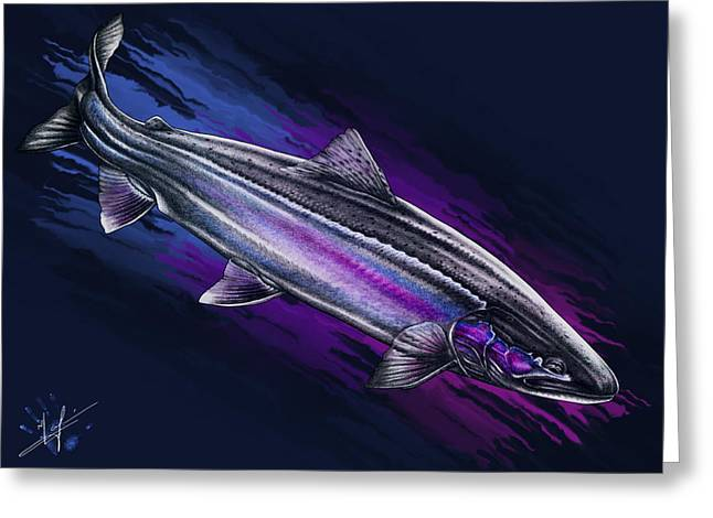 Digital Drawings Greeting Cards - Steelhead Wash Greeting Card by Nick Laferriere