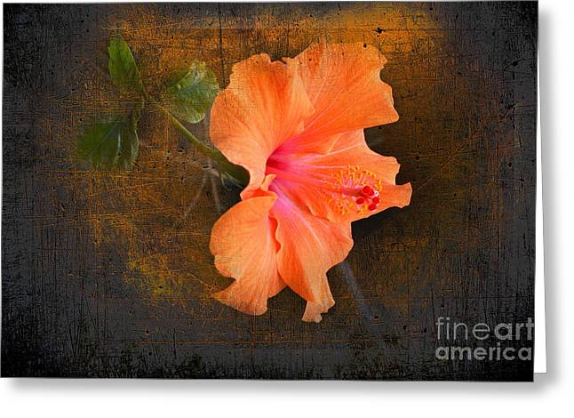 Stone Age Inc Greeting Cards - Steely Hibiscus Greeting Card by The Stone Age