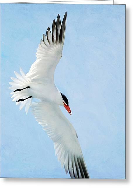 Tern Greeting Cards - Steep Tern Greeting Card by Fraida Gutovich