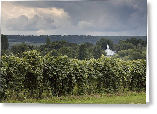 Concord Grapes Greeting Cards - Steeple in the Vines Greeting Card by Rebecca Samler
