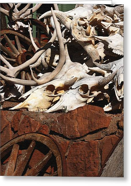 Steer Skulls And Antlers Greeting Card by Art Block Collections