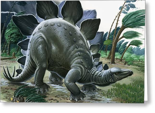 Dinosaurs Greeting Cards - Stegosaurus Greeting Card by English School