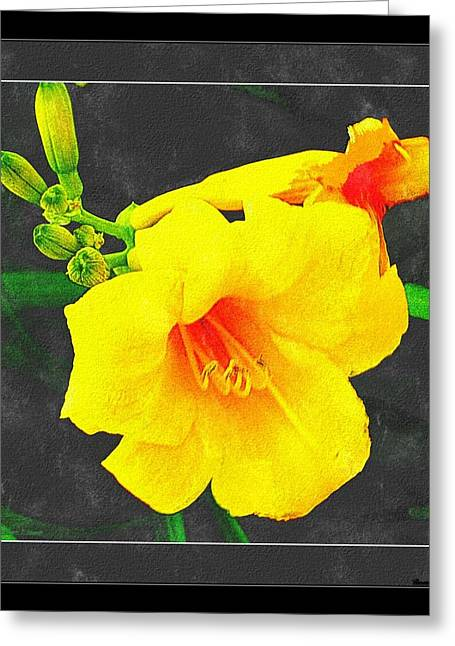 Stella Dora Day Lilies Greeting Card by Rosemarie E Seppala