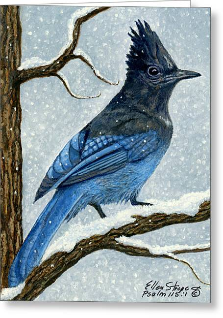Stellar Paintings Greeting Cards - Stellar Jay in Winter Greeting Card by Ellen Strope