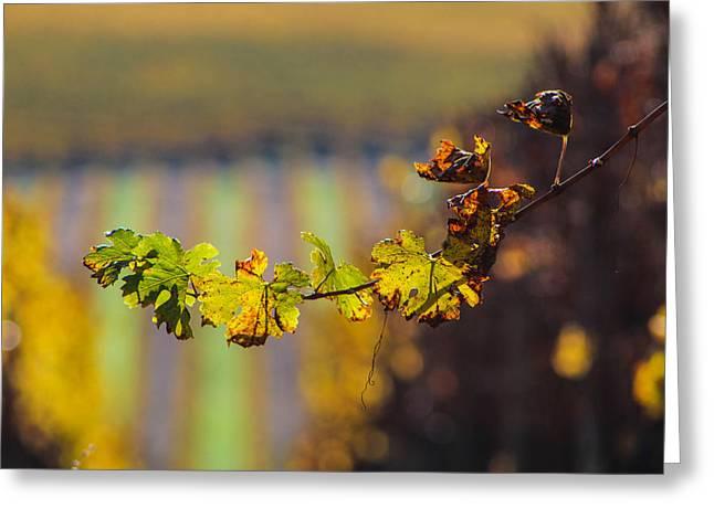 Stellen Vine Greeting Card by Duane Edward Sanchez