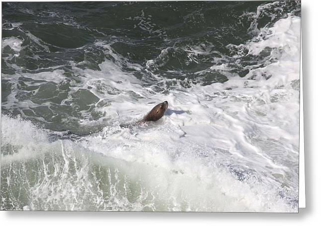 Sea Lions In The Ocean Greeting Cards - Steller Sea Lion - 0015 Greeting Card by S and S Photo