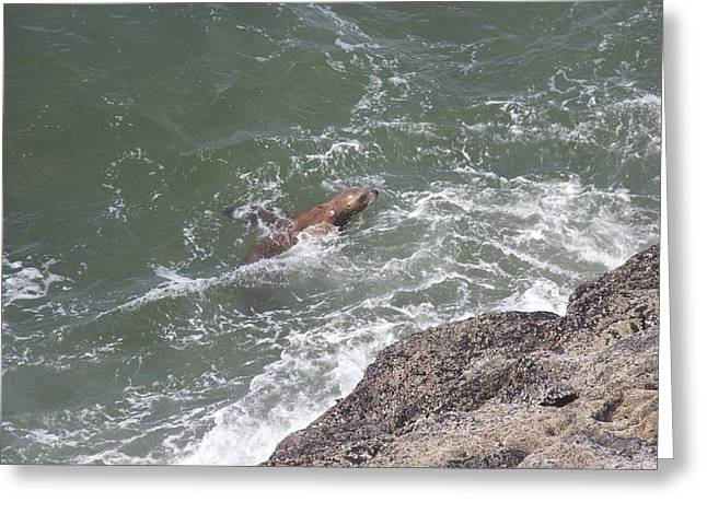 Sea Lions In The Ocean Greeting Cards - Steller Sea Lion - 0017 Greeting Card by S and S Photo