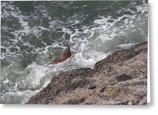 Sea Lions In The Ocean Greeting Cards - Steller Sea Lion - 0019 Greeting Card by S and S Photo