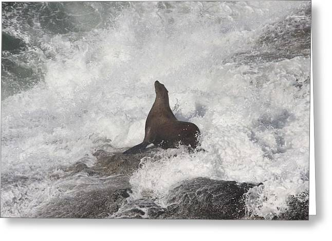 Sea Lions In The Ocean Greeting Cards - Steller Sea Lion - 0021 Greeting Card by S and S Photo