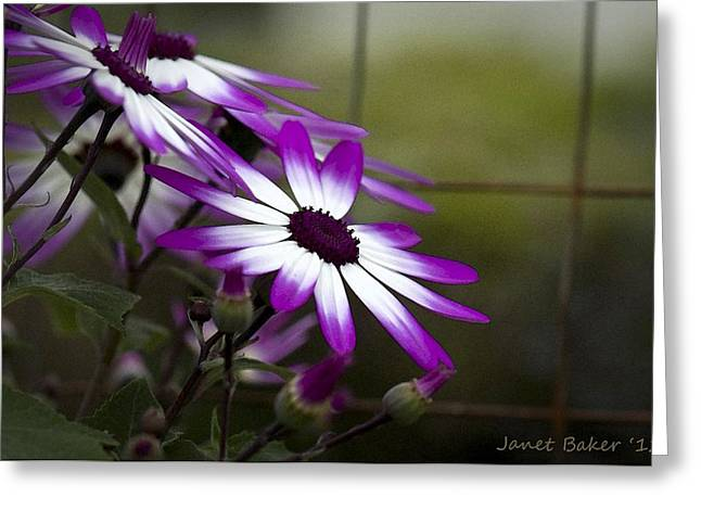Senetti Photographs Greeting Cards - Step back in time. Greeting Card by Janet Baker