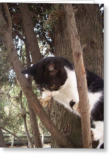 Kitten Prints Greeting Cards - Step One  Climb The Tree  Greeting Card by Rick Todaro