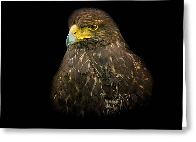 Square Greeting Cards - Steppe Eagle Greeting Card by Bill  Wakeley