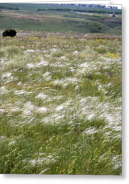 Reserve Greeting Cards - Steppe grassland Greeting Card by Science Photo Library