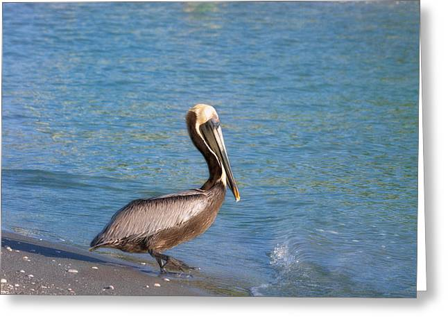 Captiva Greeting Cards - Stepping In Greeting Card by Kim Hojnacki