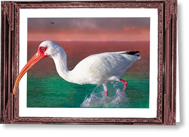 Seabirds Digital Art Greeting Cards - Stepping Out Greeting Card by Betsy A  Cutler