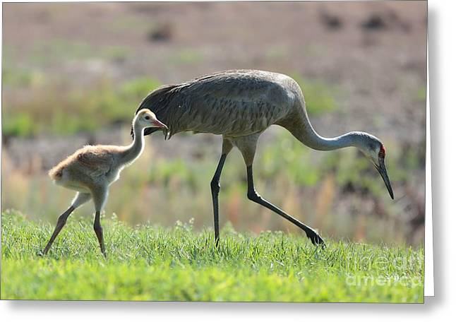 Baby Bird Greeting Cards - Stepping Out with My Baby Greeting Card by Carol Groenen
