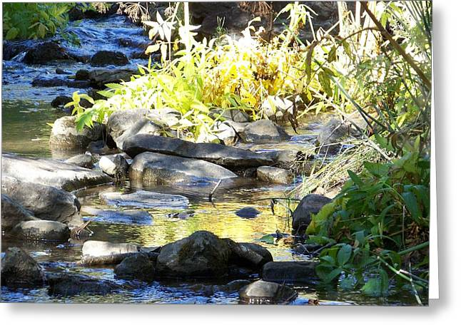 Stepping Stones Greeting Cards - Stepping Stones Greeting Card by Sheri Keith