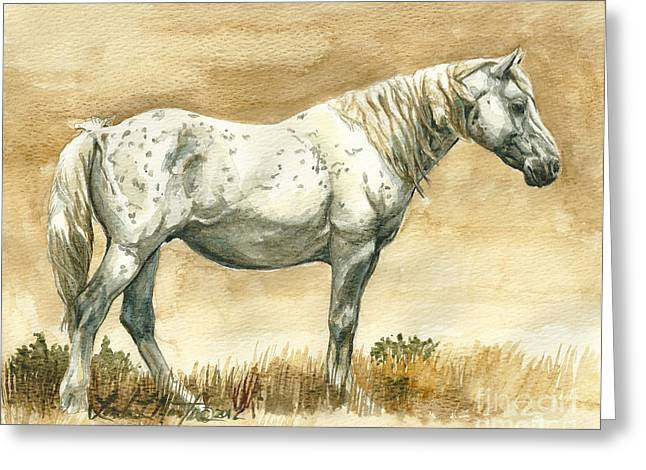 Sterling Wild Stallion of Sand Wash Basin Greeting Card by Linda L Martin