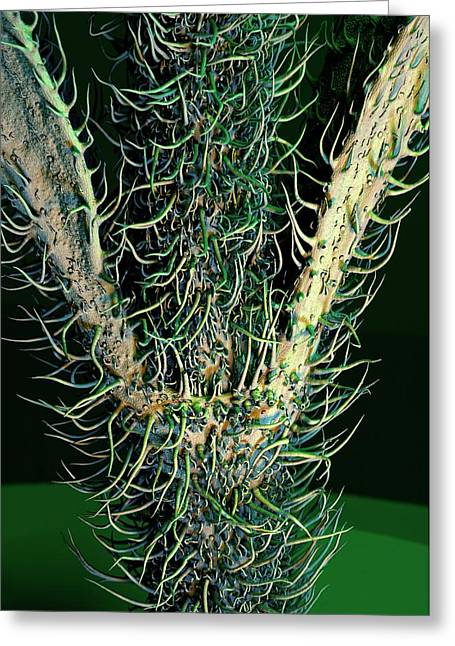 Stevia Stem Trichomes Greeting Card by Stefan Diller