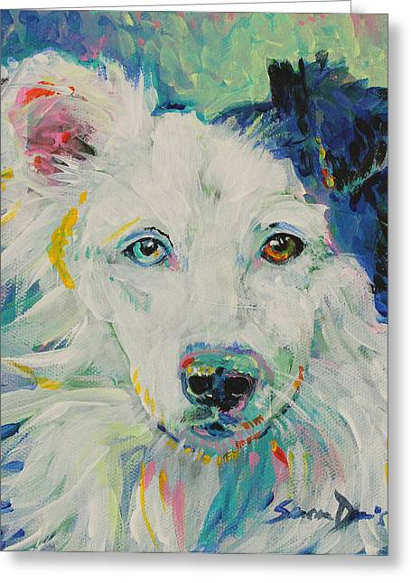 Collie Greeting Cards - Stevie the Wonder Dog Greeting Card by Susan Davies