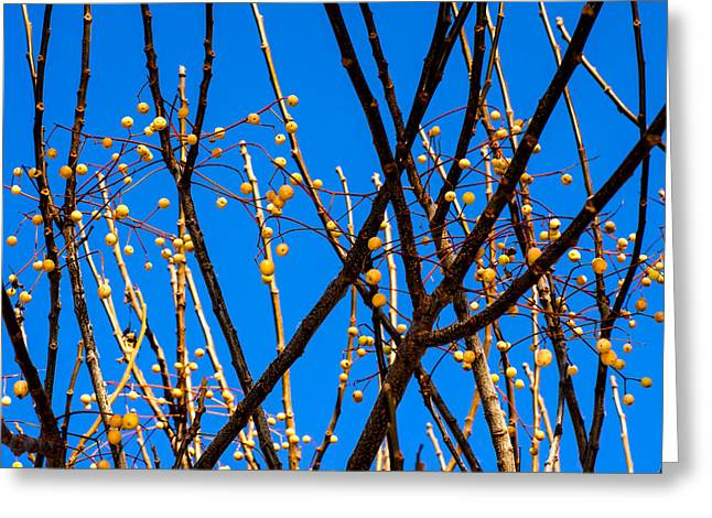 Bare Trees Greeting Cards - Sticks and Stones Greeting Card by Camille Lopez
