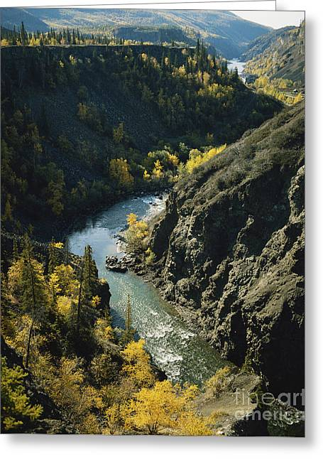 The Grand Canyon Greeting Cards - Stikine River, British Columbia Greeting Card by Tracy Knauer