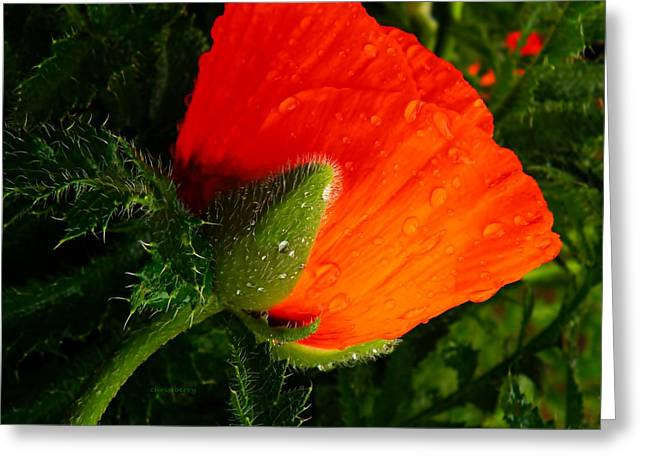 Rain Droplet Photographs Greeting Cards - Still Bright and Beautiful Greeting Card by Chris Berry