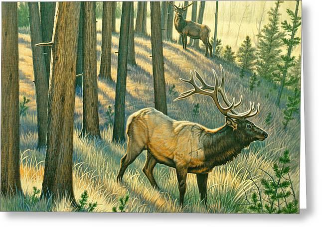 Elk Greeting Cards - Still Champiion Greeting Card by Paul Krapf