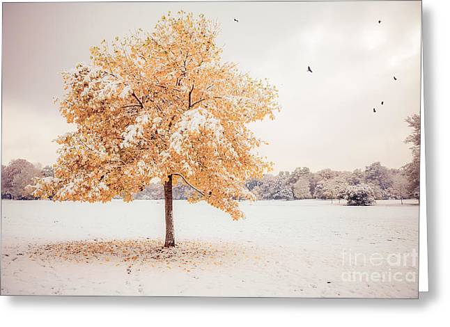 Hannes Cmarits Greeting Cards - Still Dressed In Fall Greeting Card by Hannes Cmarits