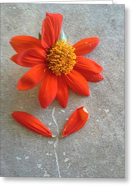 Florida Flowers Mixed Media Greeting Cards - Still Growing Here Greeting Card by Gustave Kurz