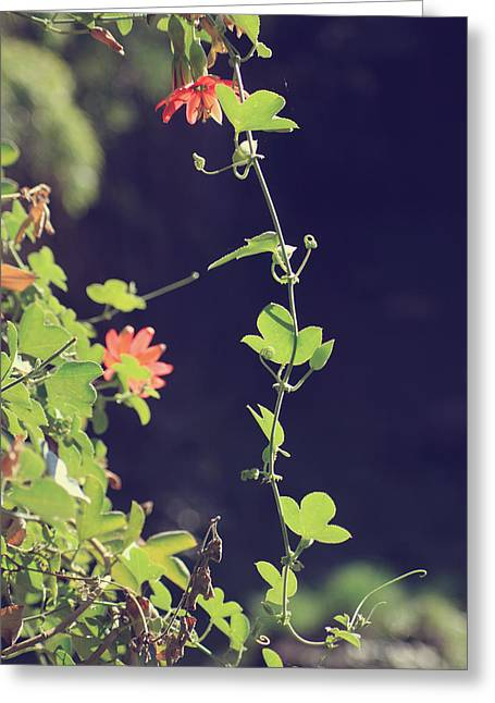 Vines Greeting Cards - Still Holding On Greeting Card by Laurie Search