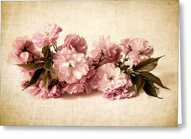 Pink Digital Greeting Cards - Still Life Blossom Greeting Card by Jessica Jenney