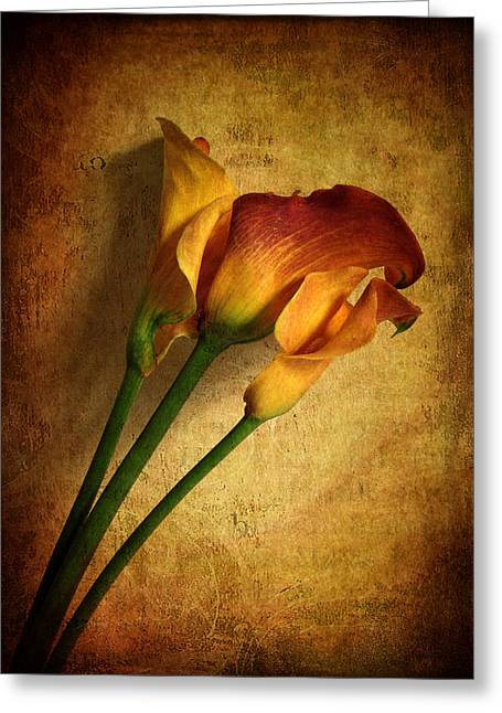 Floral Still Life Digital Greeting Cards - Still Life Calla Greeting Card by Jessica Jenney