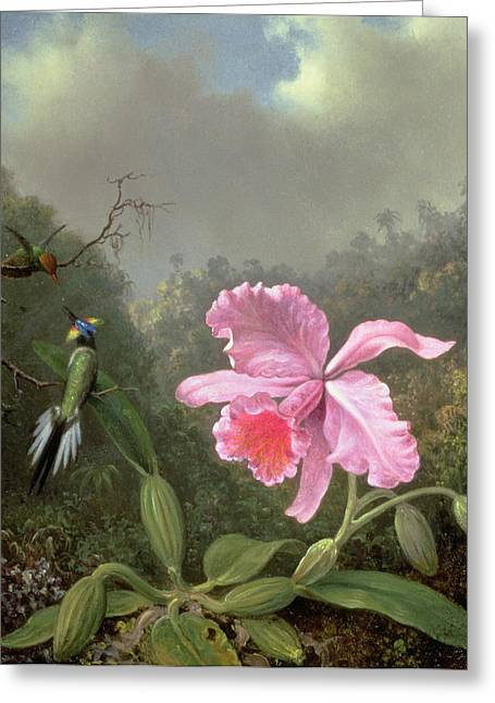Botany Greeting Cards - Still Life with an Orchid and a Pair of Hummingbirds Greeting Card by Martin Johnson Heade